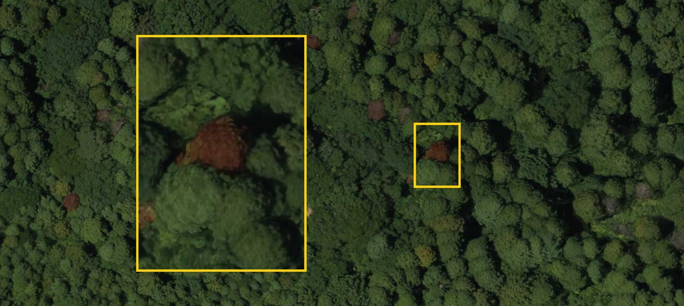 uas-forestry-identification